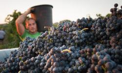 03-27-19 Wine Dinner Menhir Salento